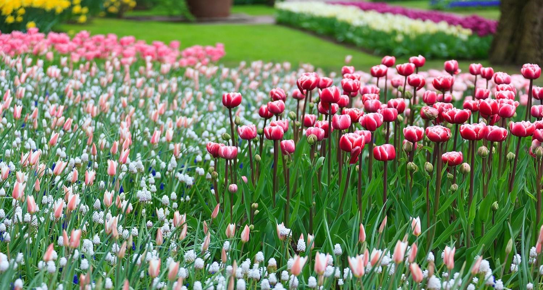 Flower Tour Holland Spring GO Dutch travel