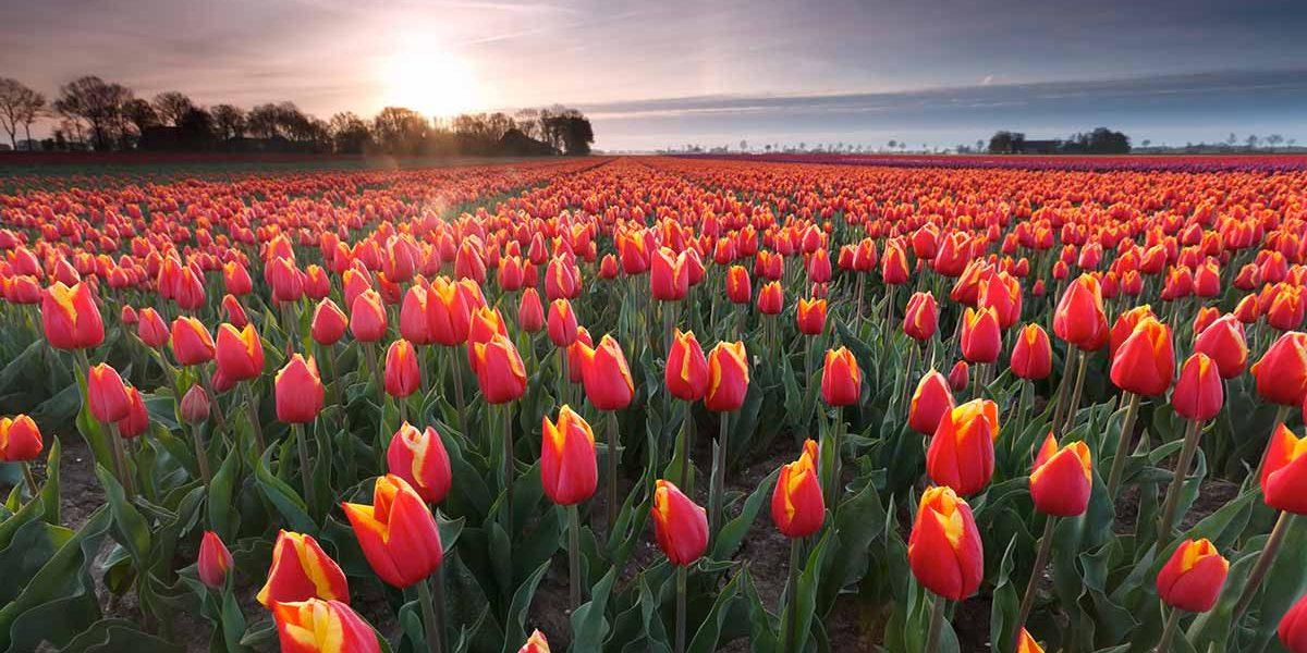 Sightseeing Holland GO Dutche travel