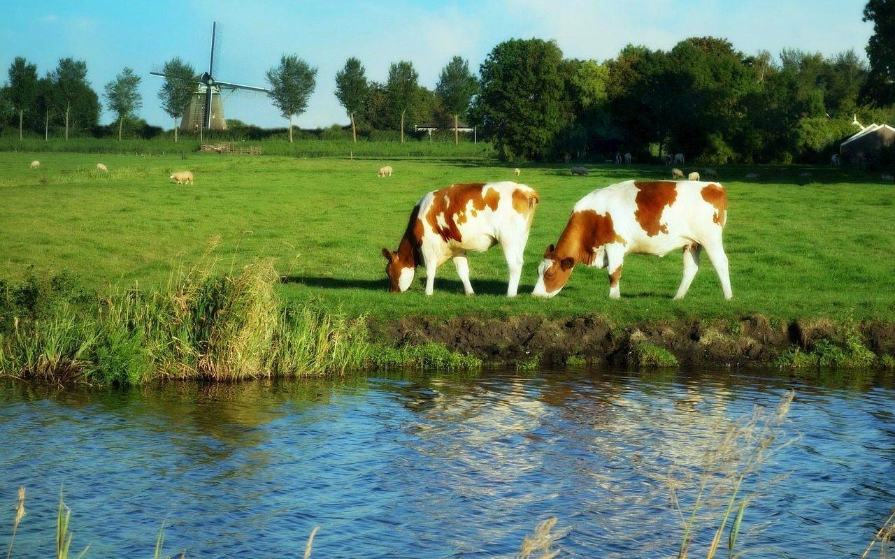 GO Dutch Travel Holland mills grass